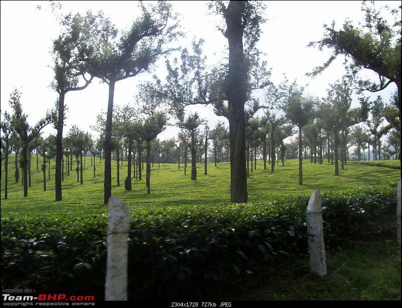 Drive through the hills of Kerala-Idukki & Munnar-100_2903.jpg