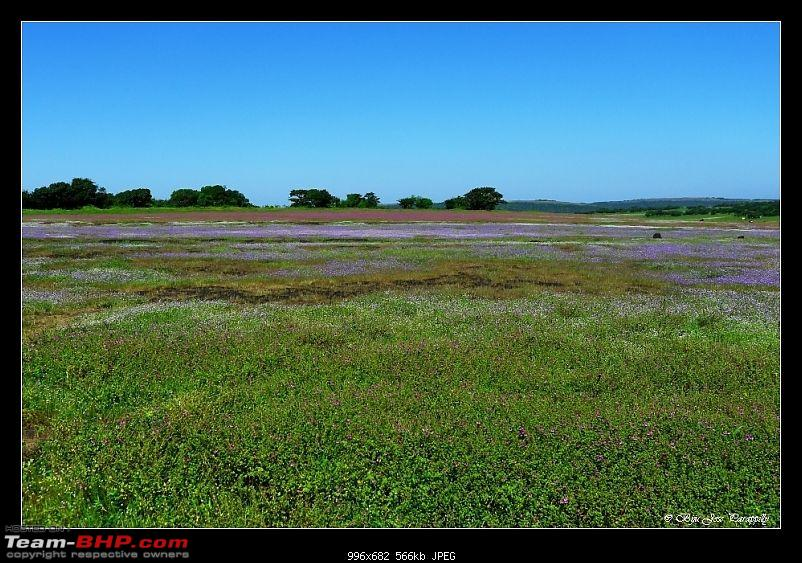 2011 Post Monsoon Trips : Kaas and Bamnoli, a photographer's paradise.-p1050113.jpg