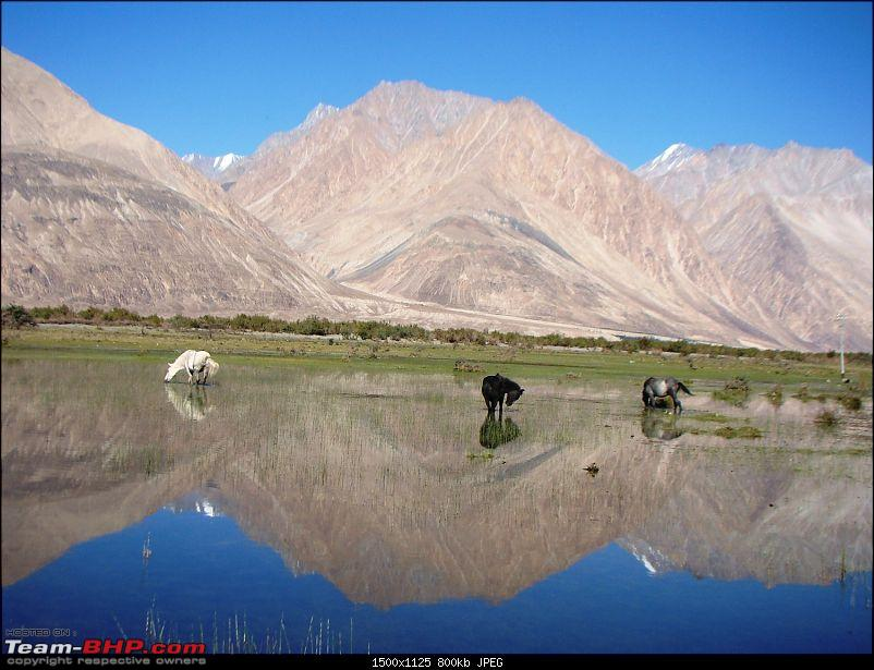 Ladakh: A sojourn to the roof of the world…over 21 days and 6500kms!!-d11-23-horses-near-diskit.jpg
