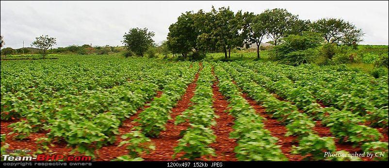 An Incredible Roadtrip to Trivandrum, Velankanni and Mesmerizing Munnar!-9-a_farm.jpg