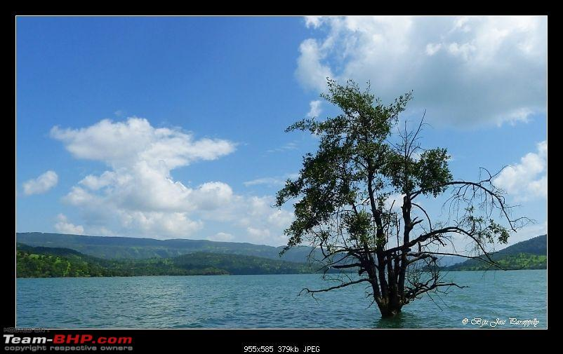 2011 Post Monsoon Trips : Kaas and Bamnoli, a photographer's paradise.-p1050321.jpg