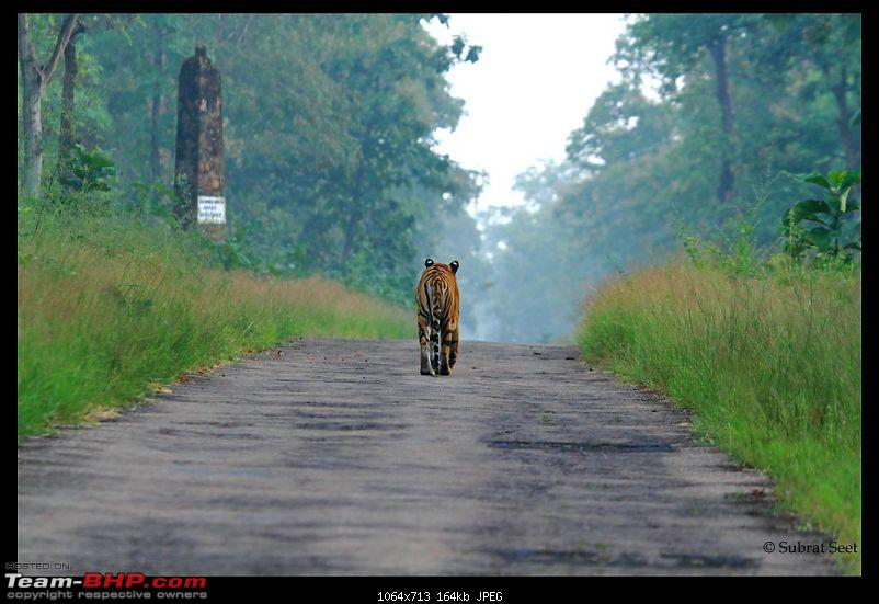 Beginning of a Brand New Season at Tadoba Andhari Tiger Reserve with Grand Sightings-tadoba2892-copy-.jpg
