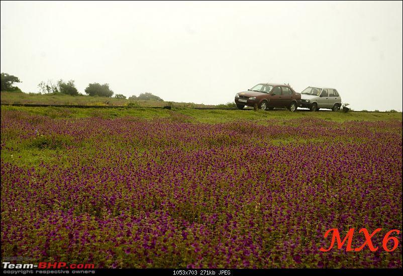 2011 Post Monsoon Trips : Kaas and Bamnoli, a photographer's paradise.-kaas-was2.jpg