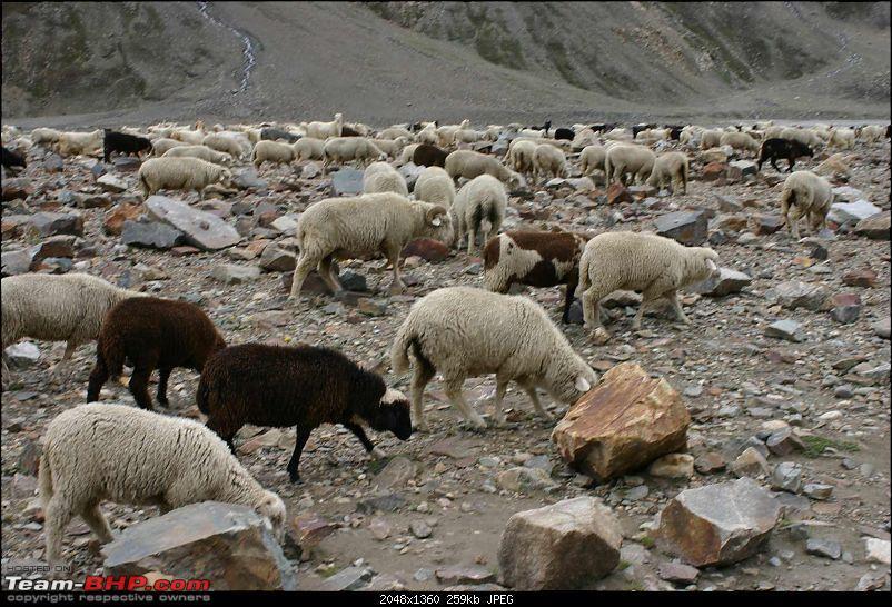 HumbLeh'd II (Indo Polish Himalayan Expedition to Ladakh & Himachal Pradesh)-img_8919.jpg