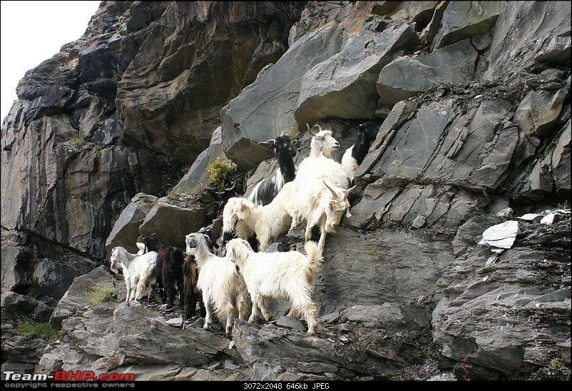HumbLeh'd II (Indo Polish Himalayan Expedition to Ladakh & Himachal Pradesh)-img_8937.jpg