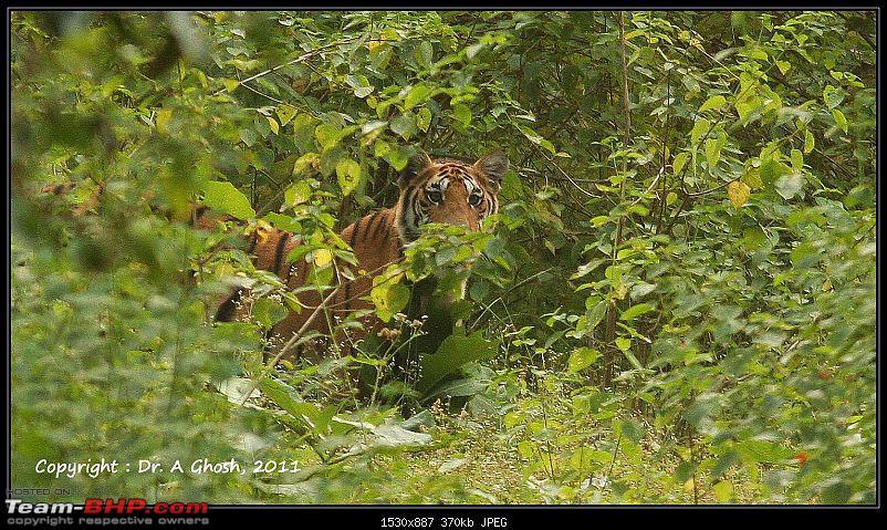 Season 2011-2012 : Independent Tiger monitoring at Pench & Tadoba Tiger reserves-img_7815.jpg