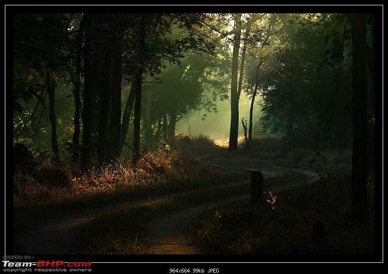 Season 2011-2012 : Independent Tiger monitoring at Pench & Tadoba Tiger reserves-5278986383_6d8519d85b_o.jpg