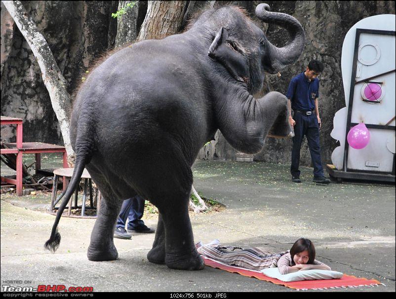 Amazing Thailand...True in every sense.-dsc_1002.jpg