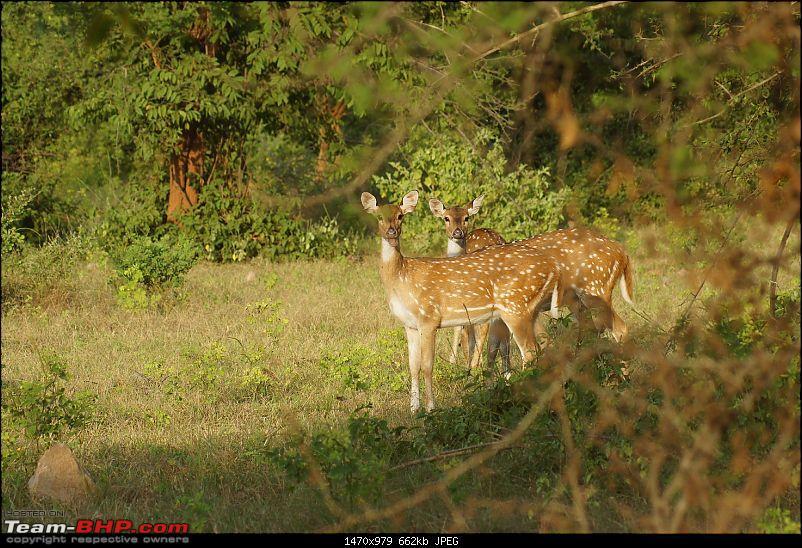 Sariska Tiger Reserve - Land of Tigers? Quick getaway from Gurgaon-deer-original.jpg