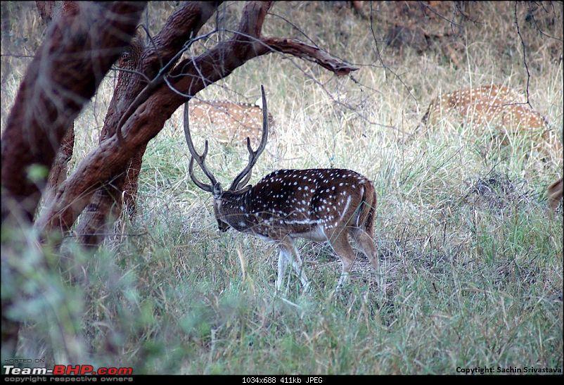 Sariska Tiger Reserve - Land of Tigers? Quick getaway from Gurgaon-dsc03947.jpg