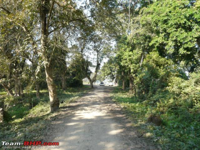 Name:  kaziranga_12 31_0143.jpg Views: 1792 Size:  78.6 KB