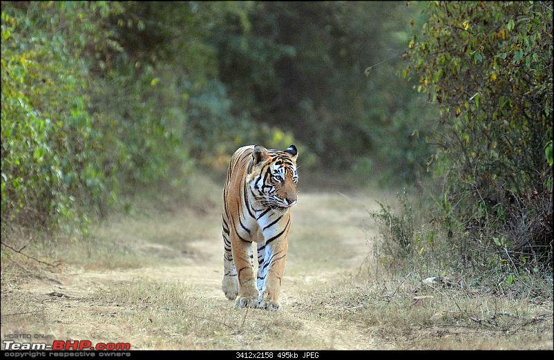 Gurgaon - Sariska - Gurgaon - Phew...Finally sighted one of the Tiger Cubs of ST2-5333.jpg