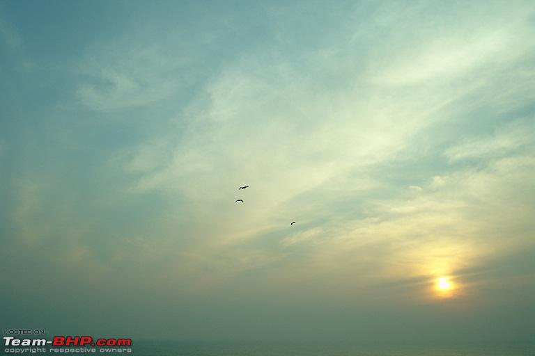 Name:  12.Birds love the sunrise.JPG