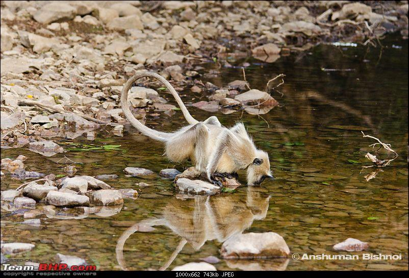 Ranthambore National Park: A Quick Travelogue-dsc_3293acr.jpg