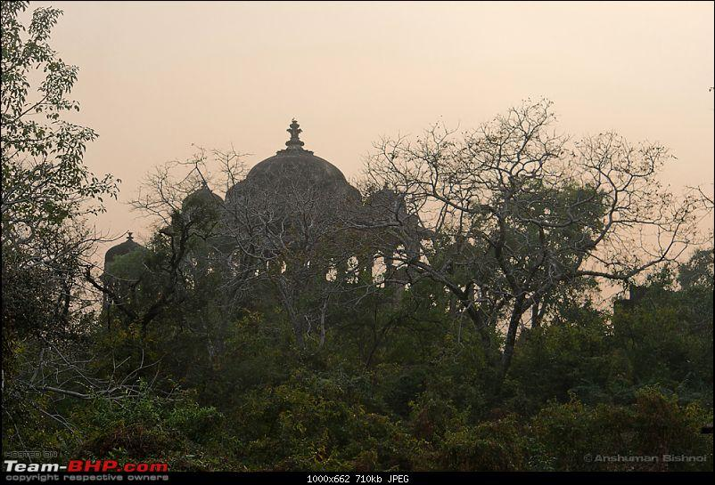 Ranthambore National Park: A Quick Travelogue-dsc_3351acr_1.jpg