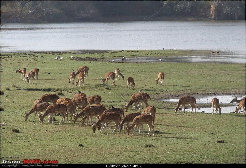 Ranthambore National Park: A Quick Travelogue-dsc04382.jpg