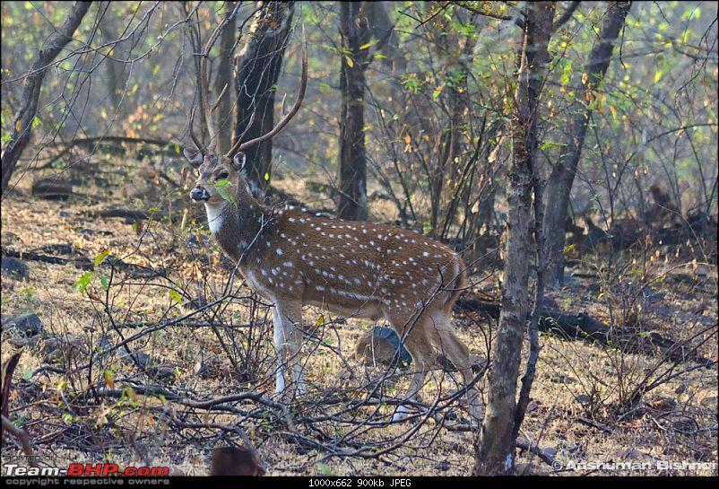 Ranthambore National Park: A Quick Travelogue-dsc_3693acr.jpg