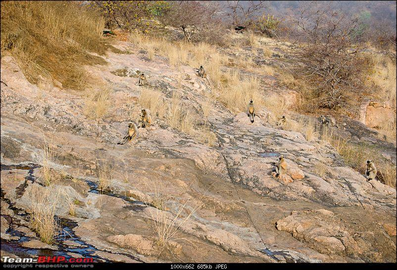 Ranthambore National Park: A Quick Travelogue-dsc_3721acr.jpg