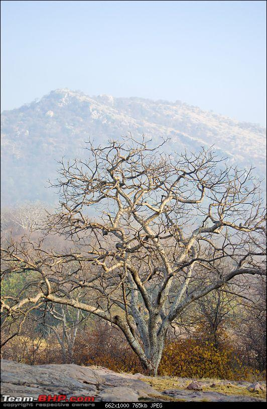 Ranthambore National Park: A Quick Travelogue-dsc_3726acr.jpg