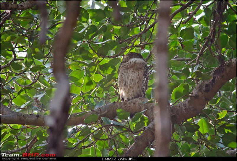 Ranthambore National Park: A Quick Travelogue-dsc_3733acr.jpg