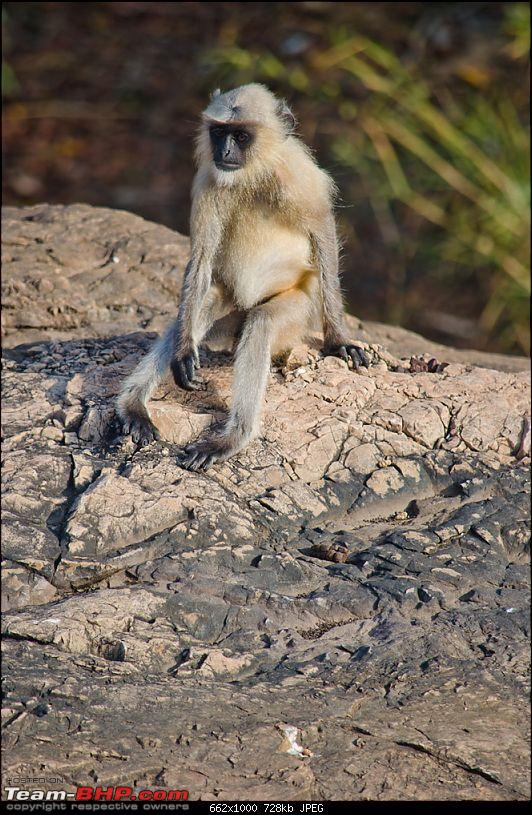 Ranthambore National Park: A Quick Travelogue-dsc_3742acr.jpg
