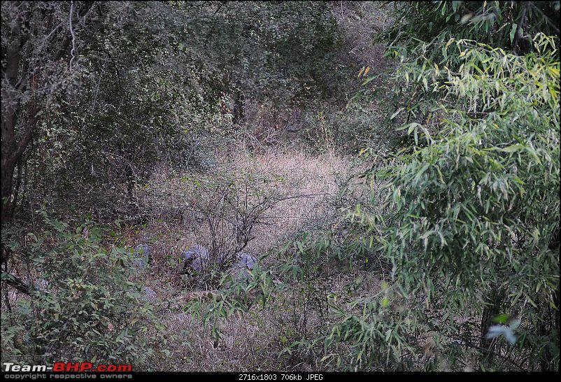 Gurgaon - Sariska - Gurgaon - Phew...Finally sighted one of the Tiger Cubs of ST2-5637.jpg