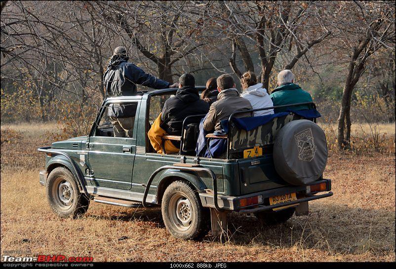 Ranthambore National Park: A Quick Travelogue-dsc_4072.jpg