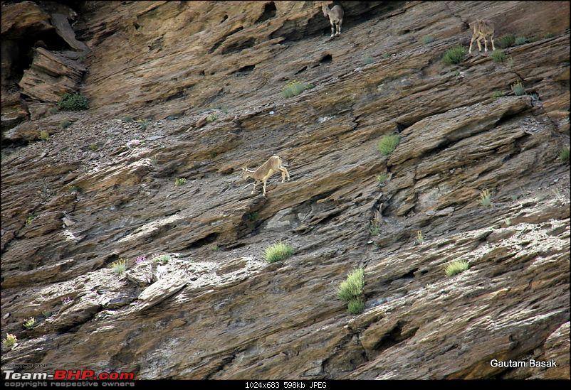 HumbLeh'd II (Indo Polish Himalayan Expedition to Ladakh & Himachal Pradesh)-img_4954.jpg