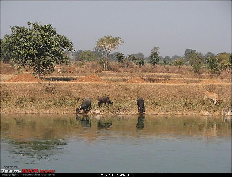 Safari Dicor LX VTT-TMT Xtreme Travel - Orissa's Unkown Forests: Debrigarh & Sunabeda-img_8494e.jpg
