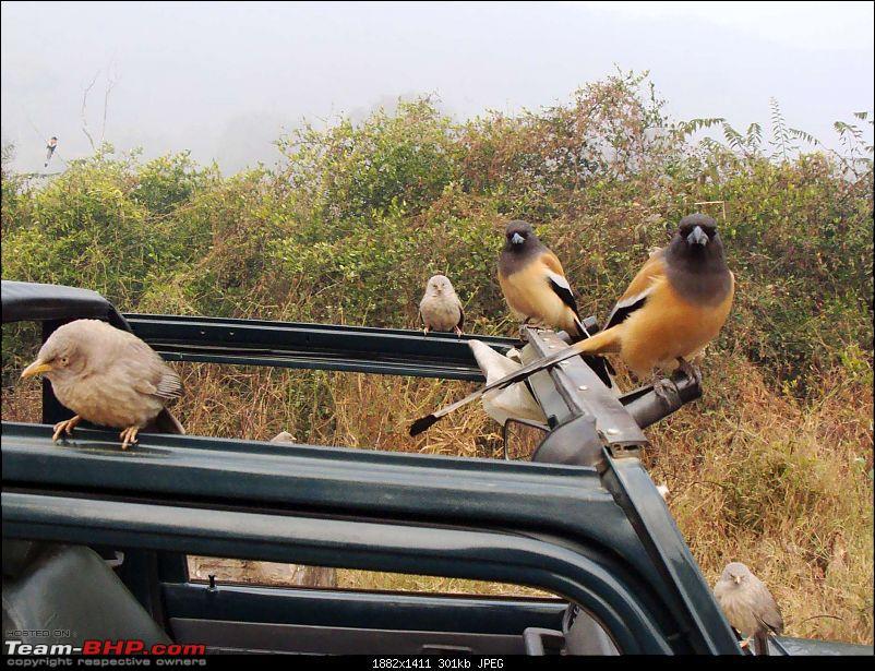 Hawk-On-Fours® (H-4®) Roadtrip: Ranthambhore & Sariska, then Bharatpur-dsc07006k300.jpg