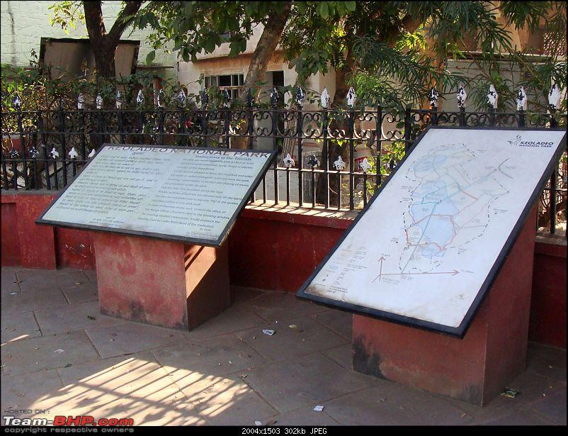 Hawk-On-Fours® (H-4®) Roadtrip: Ranthambhore & Sariska, then Bharatpur-bharatpur-20120122-17k300.jpg