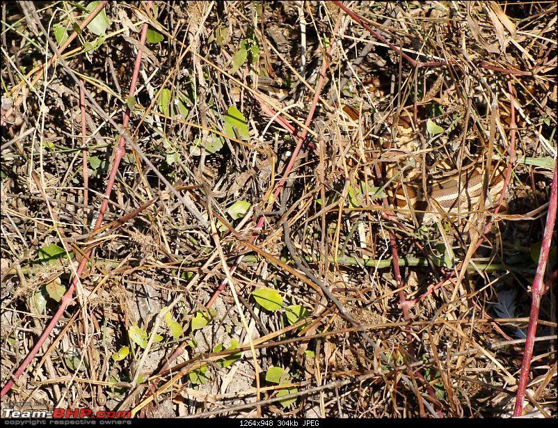 Hawk-On-Fours® (H-4®) Roadtrip: Ranthambhore & Sariska, then Bharatpur-bharatpur-20120122-95k300.jpg