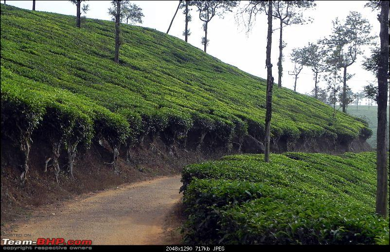 Wayanad - 'Gods Own District' in 'Gods Own Country'!!..-dscn6543-copy.jpg