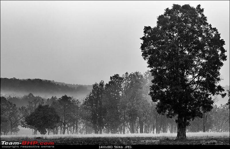Kanha National Park: Photologue-_a0r9252bwless1mb.jpg