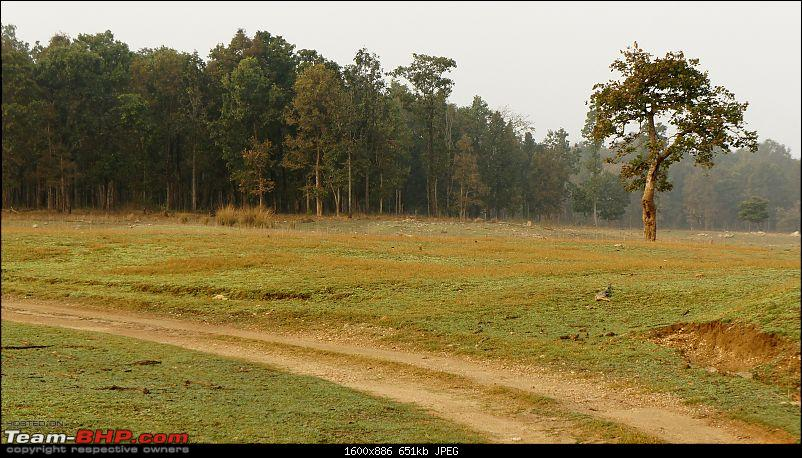 """Reflections on Wildlife Addictions """"Pench and Kanha National Park""""-1.jpg"""