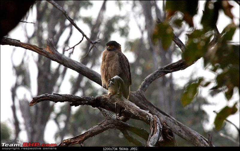"""Reflections on Wildlife Addictions """"Pench and Kanha National Park""""-8.jpg"""