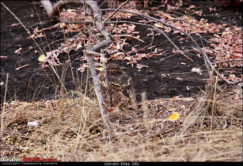 """Reflections on Wildlife Addictions """"Pench and Kanha National Park""""-14.jpg"""