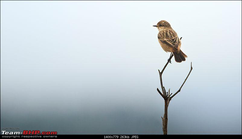 Kanha National Park: Photologue-_mg_0227less1mb.jpg