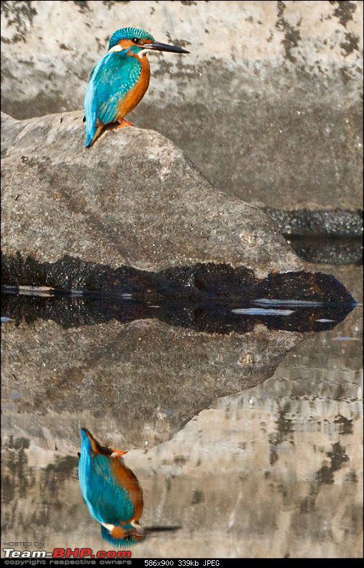 Kanha National Park: Photologue-_mg_9277less1mb.jpg