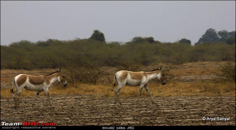 Captivating Kutch: A trip to Gujarat's outback.-_mg_3993.jpg