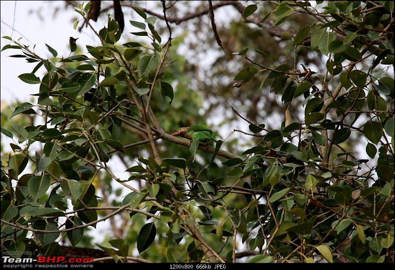 """Reflections on Wildlife Addictions """"Pench and Kanha National Park""""-26-3.jpg"""