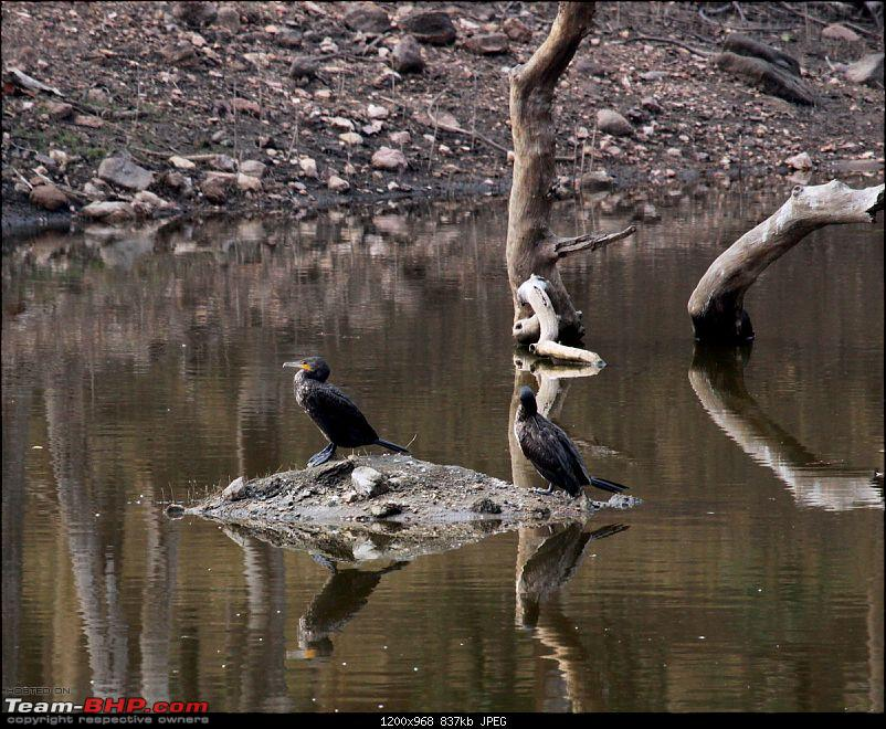 """Reflections on Wildlife Addictions """"Pench and Kanha National Park""""-21.jpg"""