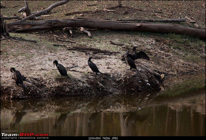 """Reflections on Wildlife Addictions """"Pench and Kanha National Park""""-22.jpg"""