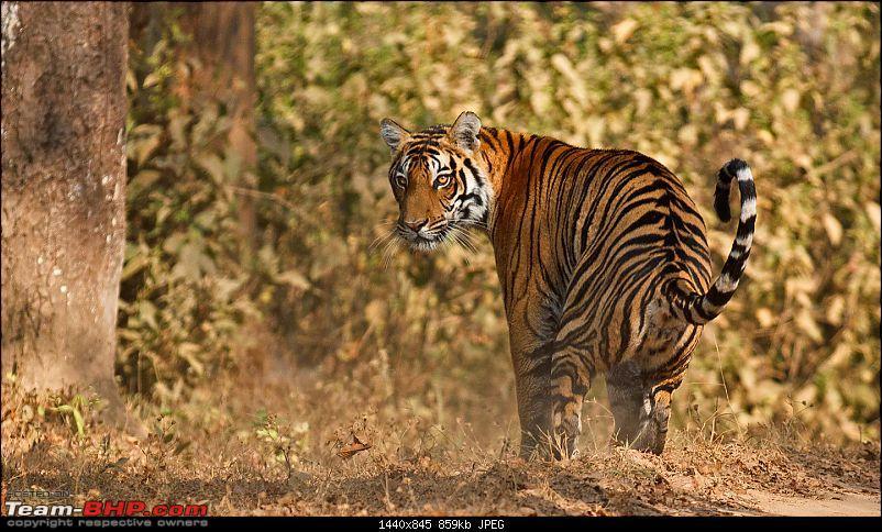 Kanha National Park: Photologue-_a0r8881less1mb.jpg