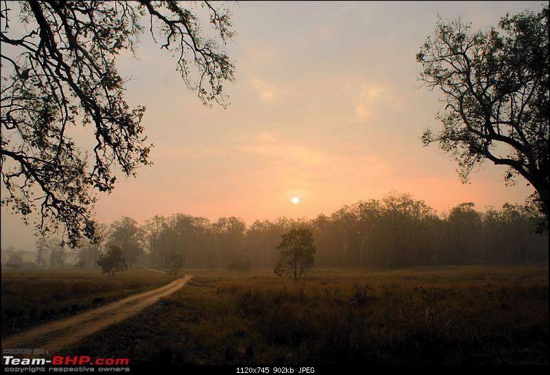 """Reflections on Wildlife Addictions """"Pench and Kanha National Park""""-13.jpg"""