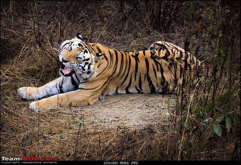 """Reflections on Wildlife Addictions """"Pench and Kanha National Park""""-16.jpg"""