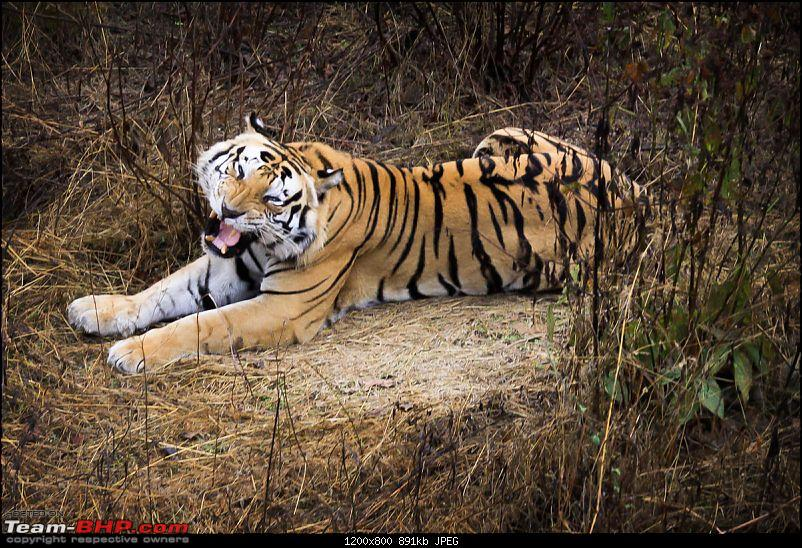 """Reflections on Wildlife Addictions """"Pench and Kanha National Park""""-17.jpg"""