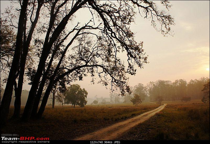 """Reflections on Wildlife Addictions """"Pench and Kanha National Park""""-20.jpg"""