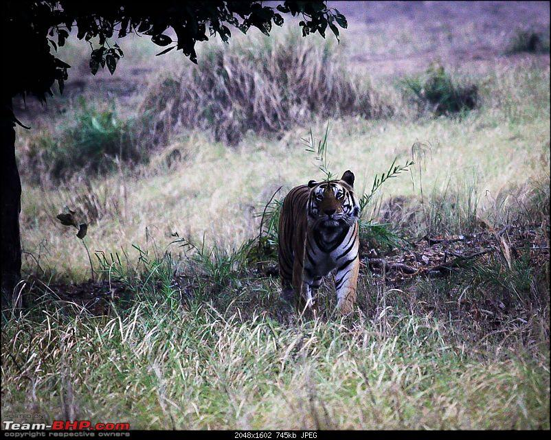 """Reflections on Wildlife Addictions """"Pench and Kanha National Park""""-27.jpg"""