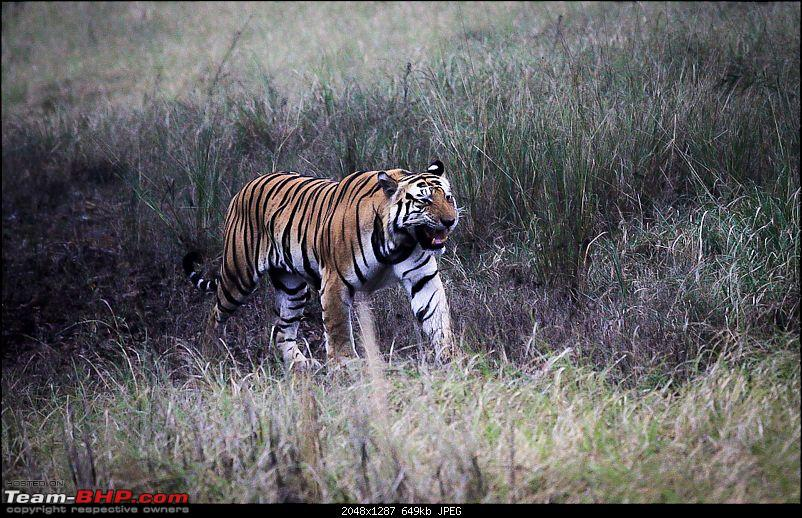 """Reflections on Wildlife Addictions """"Pench and Kanha National Park""""-29.jpg"""